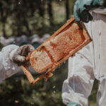 Beekeeping on Millcroft Inn & Spa grounds in Caledon